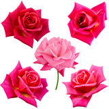 Collage of five pink roses Royalty Free Stock Image