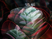 Collage of Flapjacks Cactus Stock Image