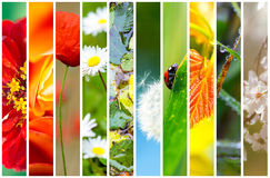 Collage flora and fauna. Collage of flora and fauna Stock Photography