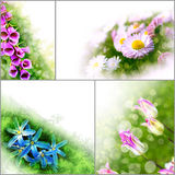 Collage floral flowers banner background tulip daisy spring Stock Photo
