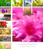 Collage floreale del biglietto di S. Valentino Fotografia Stock