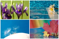 Collage with flower, daisy Stock Image