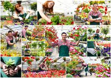Collage flower nursery - man and woman working in a nursery - pr. Collage flower nursery - men and women working in a nursery - production of flowers for sale Stock Photography