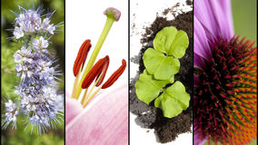 Collage of flower parts in extreme closeup Stock Image