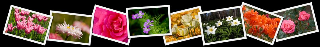 Collage of flower photographs Royalty Free Stock Photo