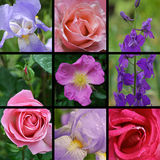 Collage of flower photos Royalty Free Stock Images