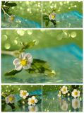 Collage with flower Stock Images