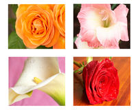 Collage of flowers. Yellow rose, red rose, lilly and gladiolus Stock Images