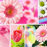 Collage flowers Royalty Free Stock Photography