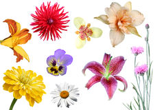 Collage from flowers royalty free stock photography