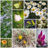 Collage with flowers Royalty Free Stock Photo
