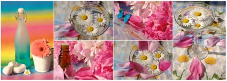 Collage with flowers Stock Image