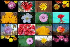 Collage flowers Stock Photos
