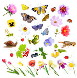 Collage of flowers, insects and animals. Stock Photography