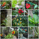 Collage. Flowers in jungle Royalty Free Stock Images