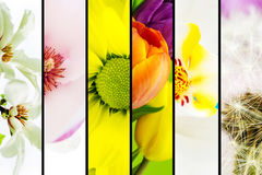 Collage of flowers Royalty Free Stock Photography
