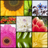 Collage of flowers in rectangles Royalty Free Stock Photo