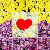 Collage of flowers with a red heart Stock Images