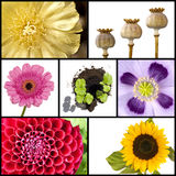 Collage of flowers in squares Stock Images