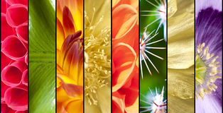 Collage of flowers in stripes Stock Photos