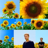 Collage of flowers of sunflower and young man in the field Royalty Free Stock Images