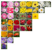 A collage of flowers on the upper left corner. Collage-mosaic of colorful flowers, collected in the form upper angle stock image