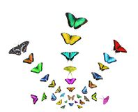 Collage of flying butterflies of different colors isolated on white background vector illustration