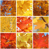 Foliage of trees at fall. Collage with foliage of trees at fall Stock Photos