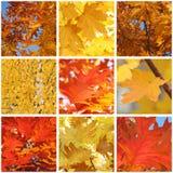 Foliage of trees at fall Stock Photos