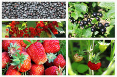 Collage of forest and garden berries Stock Images