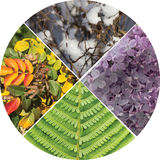Collage in the form of a circle, four seasons. Stock Image