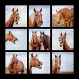 Collage fou de visage de cheval image stock