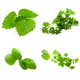 Collage of four herbs Royalty Free Stock Photo