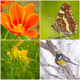 Colors of the seasons. Collage of four images depicting colors and scenes of each season of year Stock Images