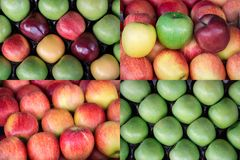 Collage from four photos of different ripe apples types. Royalty Free Stock Photos