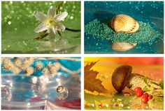 Collage with four seasons Royalty Free Stock Image
