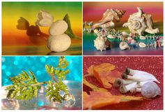 Collage with four seasons Stock Images