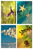 Collage with four seasons Royalty Free Stock Photo
