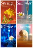Collage with four seasons Stock Photography