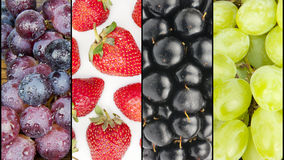 Collage of four summer fruits Stock Photography