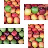 Collage från fyra foto av olika mogna äpplen skriver Arkivfoto