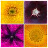 Collage of the fragments of 4 flowers, macro, closeup royalty free stock photo