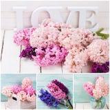 Collage with fresh  blush pink hyacinths Royalty Free Stock Image