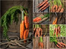 Collage with fresh carrot on rustic wooden background. Photo of mixed various kinds of carrot Royalty Free Stock Image