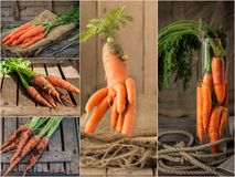 Collage with fresh carrot on rustic wooden background. Photo of mixed various kinds of carrot Royalty Free Stock Photography