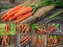 Collage with fresh carrot on rustic wooden background. Photo of mixed various kinds of carrot Royalty Free Stock Photos