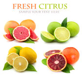 Collage of fresh citrus Royalty Free Stock Photography