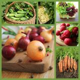 Collage with fresh natural vegetables royalty free stock image