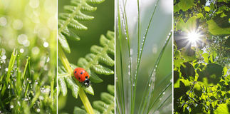 Collage - fresh nature. Collage of four Images: grass with dew Drops, fern and Lady bird, grass with dew Drops, beach leaves and sunburst Stock Images