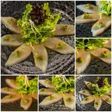 Collage. Fresh organic white tuna meat sliced at plate with sala Stock Image